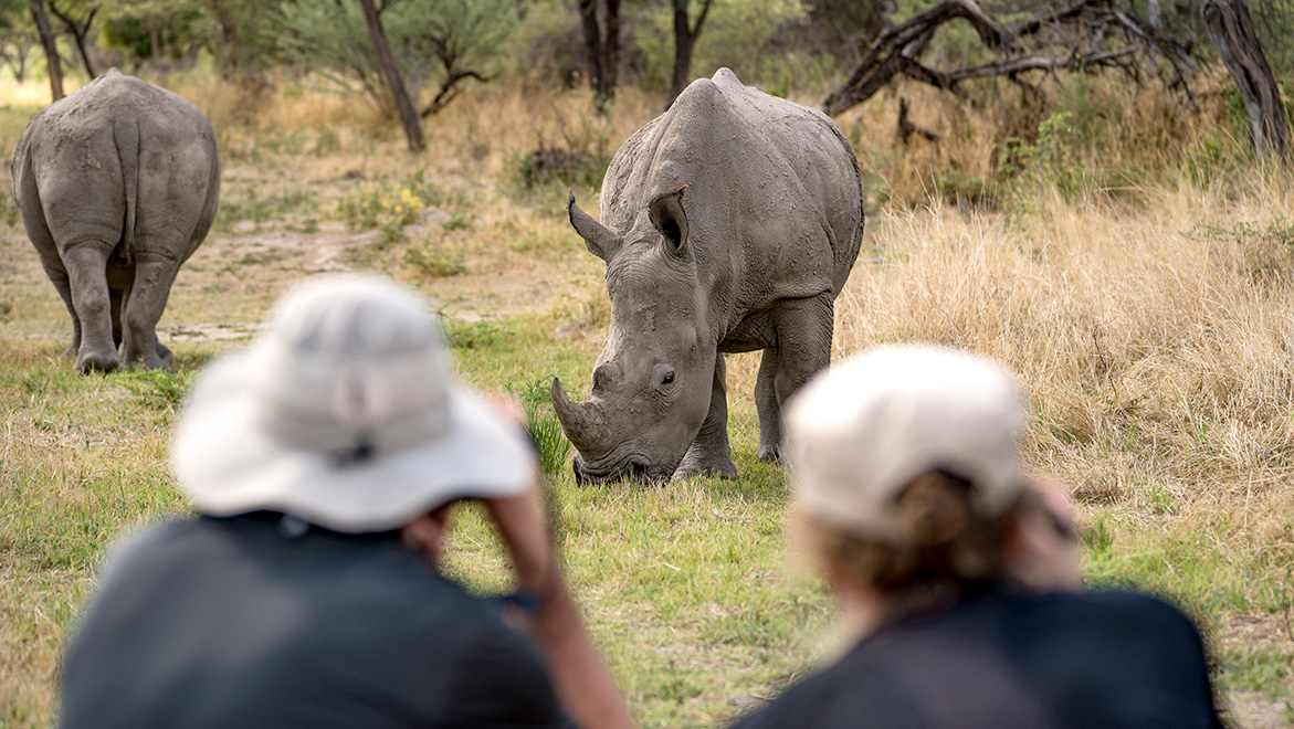 Even more exciting than in Etosha: In the Ghaub nature reserve guests encounter white rhinos up close and at eye level