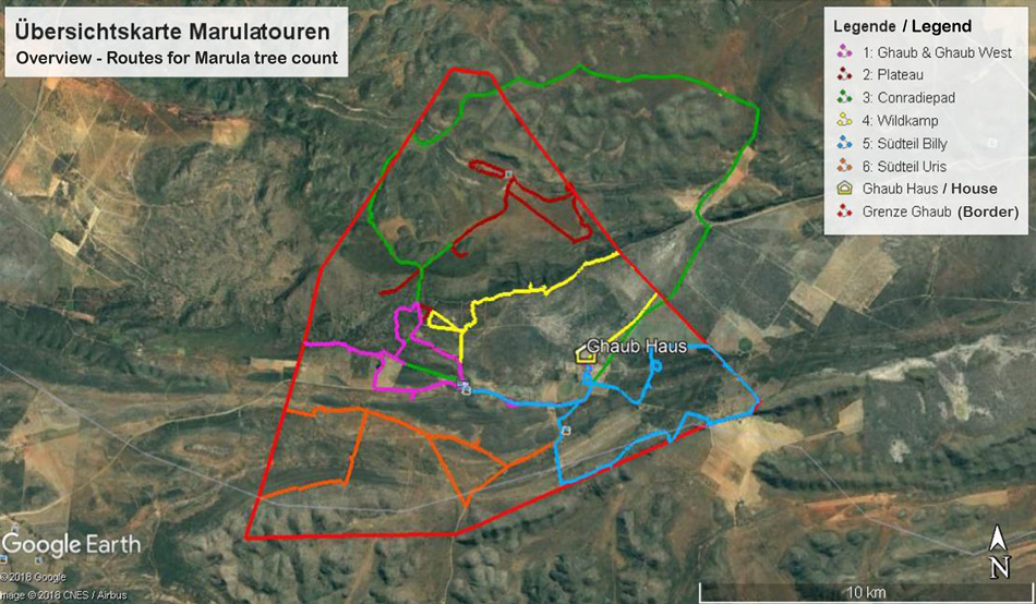 Routes for recording the Marula trees at Ghaub